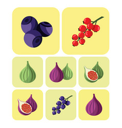Colorful fruits and berries icons set vector