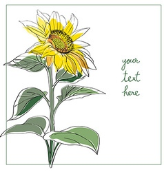 sunflower minimal card vector image