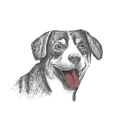 Face of dog hand drawn sketch on white background vector