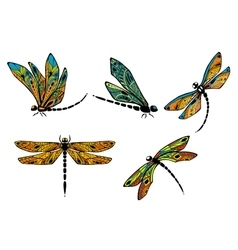 Dragonflies with ornamental openwork wings vector