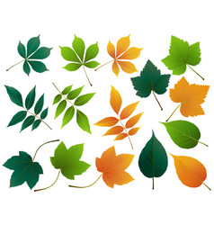 Leaves autumn leaves set isolated on vector