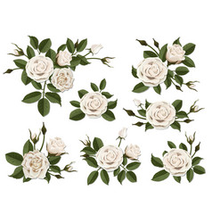 White rose boutonniere set vector