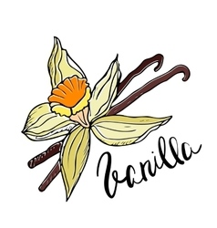 Hand drawn vanilla flower and sticks vector