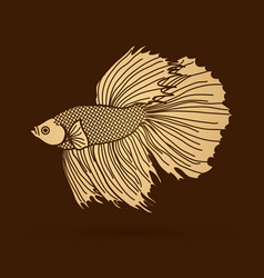 Gold siamese fighting fish graphic vector