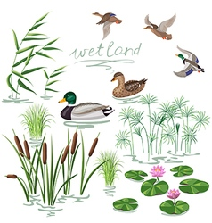 Wetland plant and duck vector