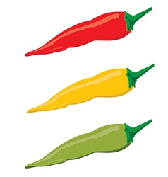 Chilli peppers vector image