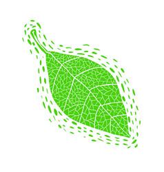 Hand drawn green leaf vector
