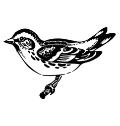 Siskin bird hand-drawn vector