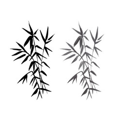 bamboo plant isolated vector image vector image