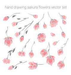 large set of delicate pink sakura cherry flowers vector image vector image
