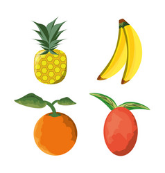 Set icon concept related with tropical fruits vector