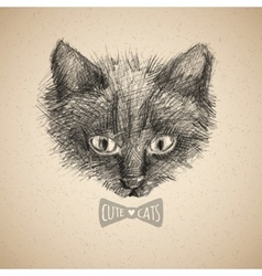 cat face sketch vector image