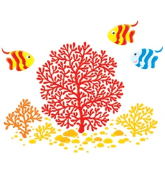 Corals and fishes vector