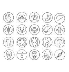 Human organs line icon set vector image