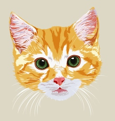 muzzle pretty beautiful red-haired kitten vector image