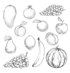 Fresh fruits sketches for food design vector image
