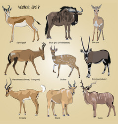 A set of realistic african antelope vector