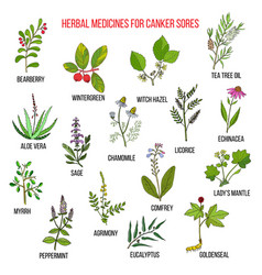 best herbal remedies for canker sores vector image