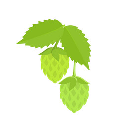 green hops on white background vector image vector image