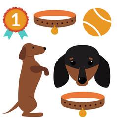 Dachshund dog playing elements vector