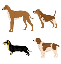 Dogs breeds vector