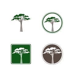 Acacia tree logo vector