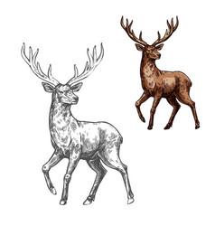 Deer reindeer or elk sketch of wild mammal animal vector