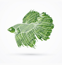 Green siamese fighting fish graphic vector