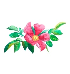 Watercolor painting trace red brier flower vector