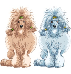 dog Poodle breed sitting vector image vector image