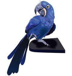 Exotic parrot vector