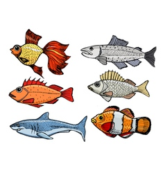 Kinds of the fishes vector