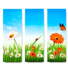 Nature summer banners with colorful flowers and vector image