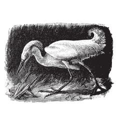 Snowy egret vintage vector