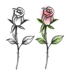 Ink sketched and colorful roses vector