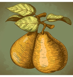engraving pear retro vector image