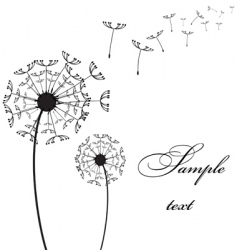 two dandelion vector image