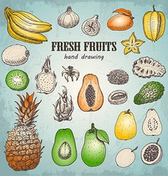 Set of fresh tropical fruits in sketch style vector