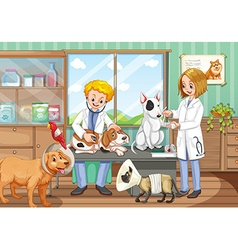 Two vets working in the animal hospital vector image