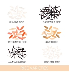Rice varieties vector