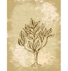 tree sketch vintage background vector image
