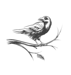 Raven or black crow sketches and silhouettes set vector image