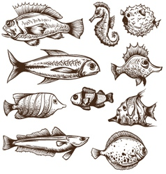 Set of fishes isolated on a white backgrounds vector