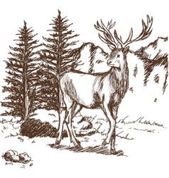 Hand drawn deer big antlers wildlife poster vector