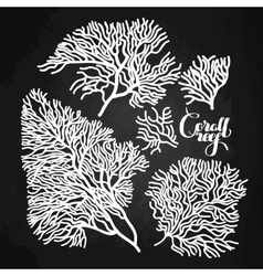 Graphic coral collection vector