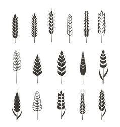 Set of simple wheat ears icons and design elements vector