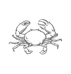 sketch cartoon sea crayfish crab isolated vector image vector image