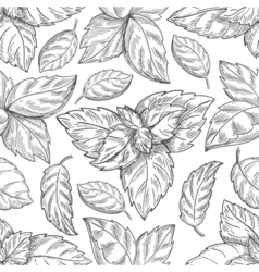 Mint leaf pattern Peppermint leaves sketch vector image