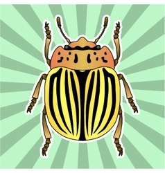 Insect anatomy sticker colorado potato beetle vector