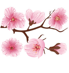 Sakura flower branch element elegant vector